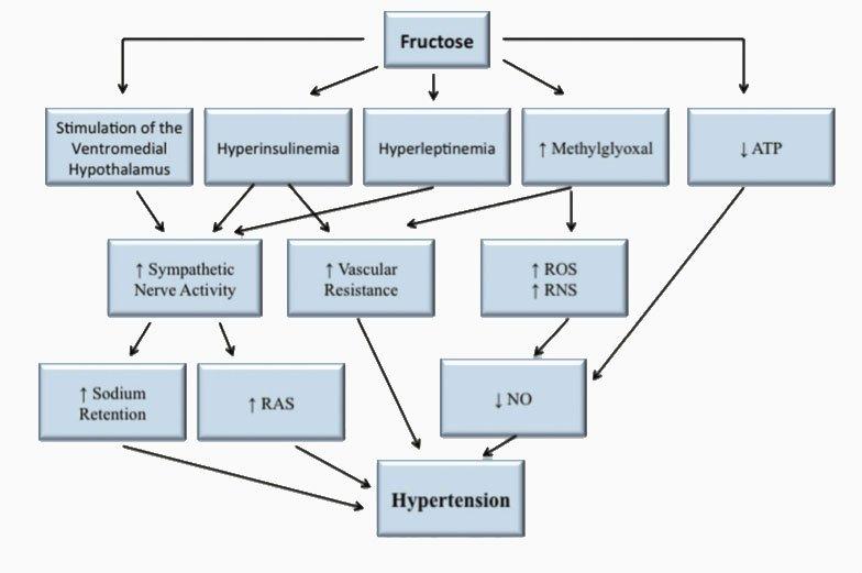Esquema-de-las-relaciones-existentes-directas-e-indirectas-con-sus-intermediarios-entre-la-fructosa-y-la-hipertensión-arterial