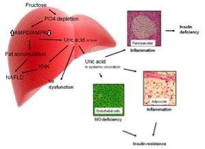 Mecanismos de resistencia insulínica