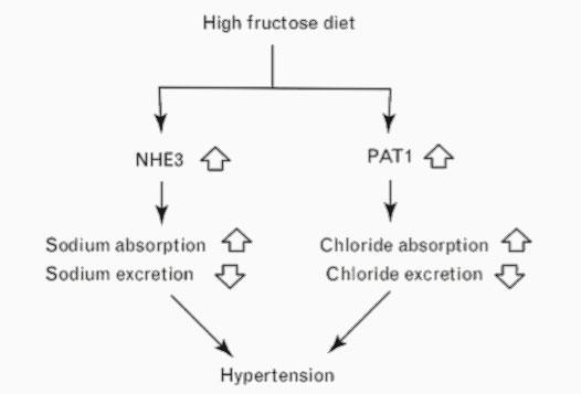 Relación-entre-la-ingesta-de-fructosa-y-el-aumento-de-tensión-arterial