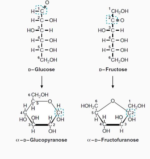 estructura-de-la-glucosa