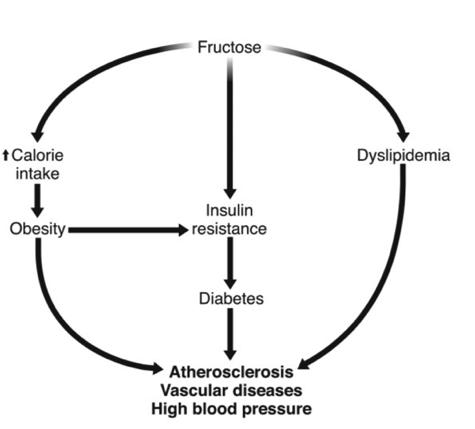 Relación entre el consumo de fructosa y las alteraciones metabólicas que puede producir tanto a largo como a corto plazo (Tappy, 2010).